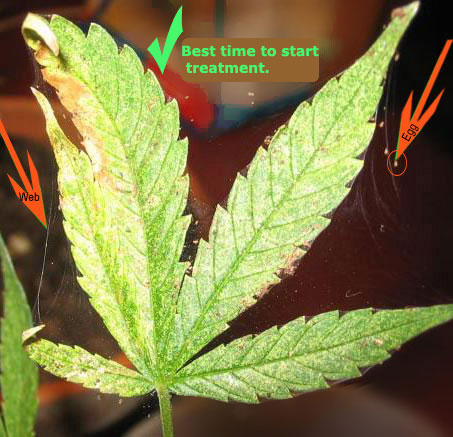 The 2 Best Ways to Identify Female and Male Marijuana Plants